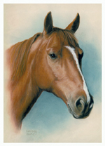 horse portrait of tucker mini